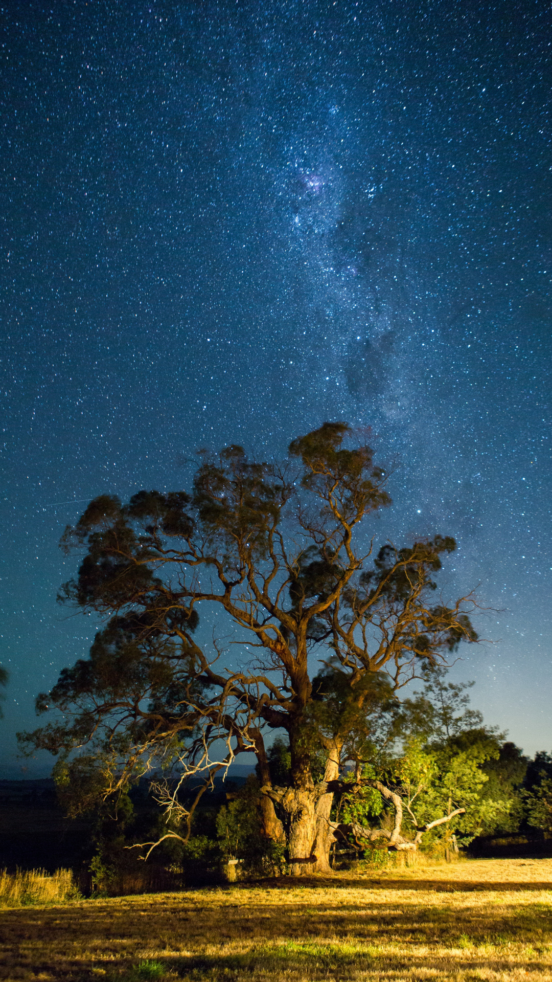 Tree, Star, Sky And Milky Iphone Wallpaper - If You Realize How Powerful Your Thoughts , HD Wallpaper & Backgrounds