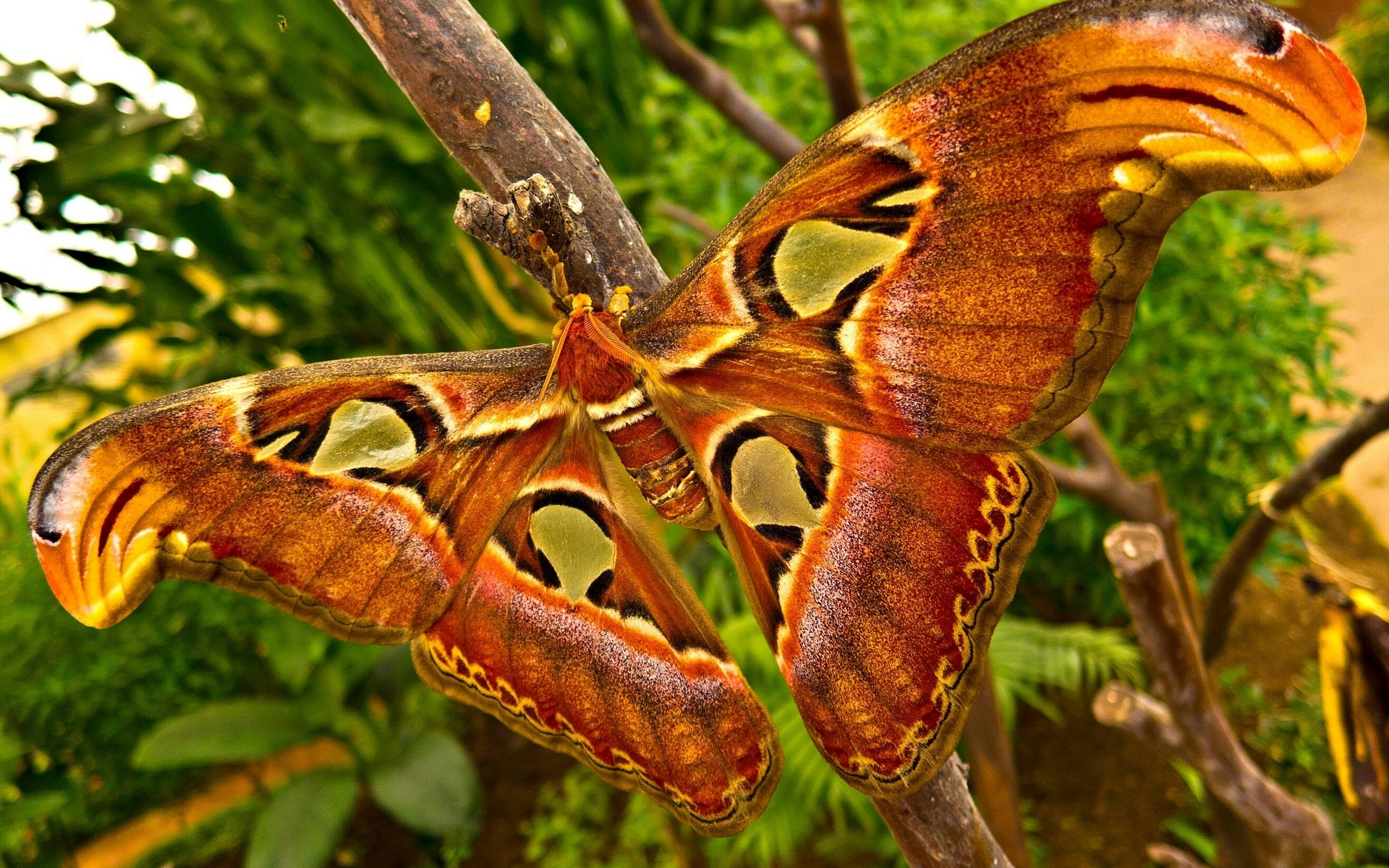 Animals, Insects, Moth, Butterfly, Wings, Colors, Contrast, - Insects In A Forest , HD Wallpaper & Backgrounds