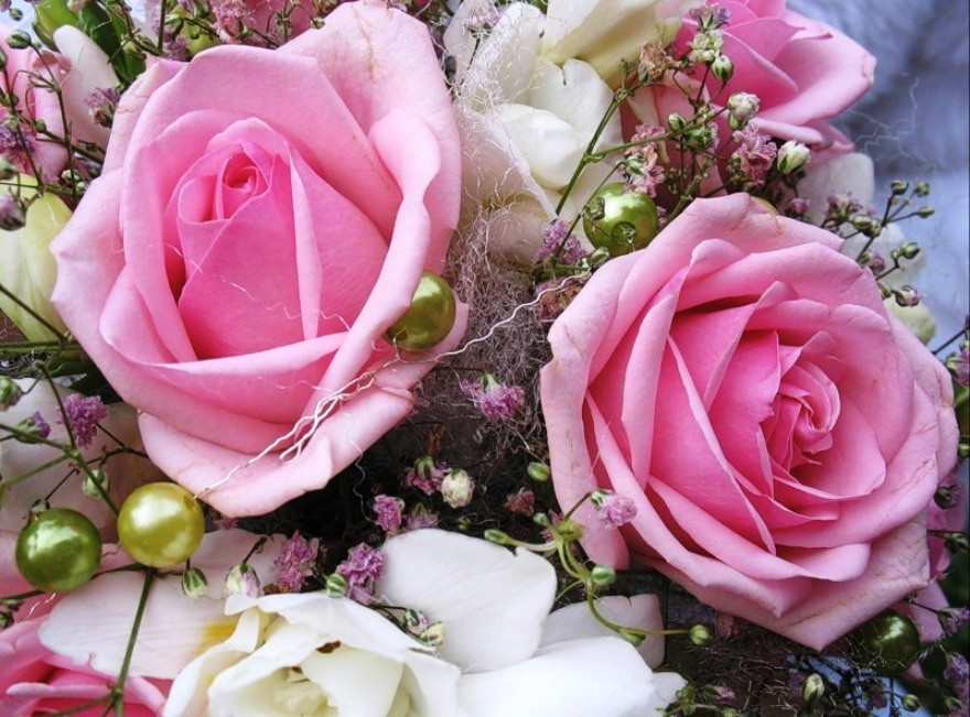 Roses Nature Perfume Beauty Pink White Beautiful Delicate - Flower Wallpaper Image Most Beautiful Rose , HD Wallpaper & Backgrounds