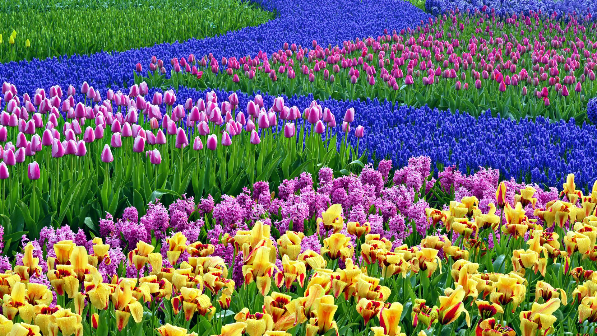Spring Wallpapers Desktop High Quality - Spring Flowers Desktop Backgrounds , HD Wallpaper & Backgrounds