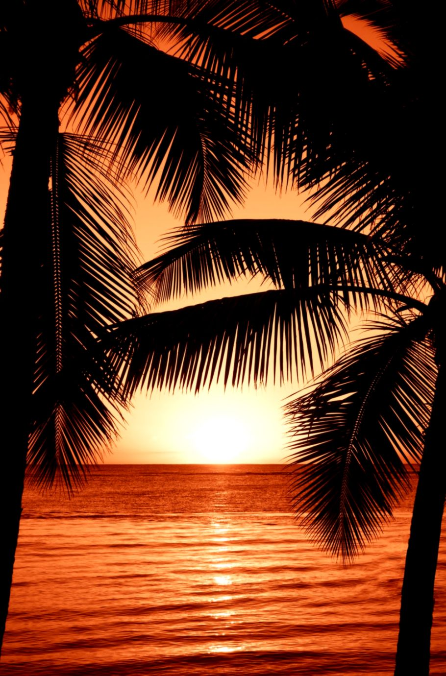 500 Wallpaper Pictures Download Free Hd Images On Unsplash - Sunset With Palm Trees Painting , HD Wallpaper & Backgrounds
