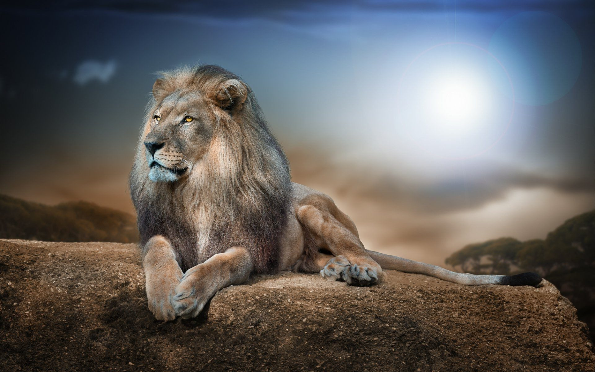 Lion Wallpaper 4k - Lion On A Rock , HD Wallpaper & Backgrounds