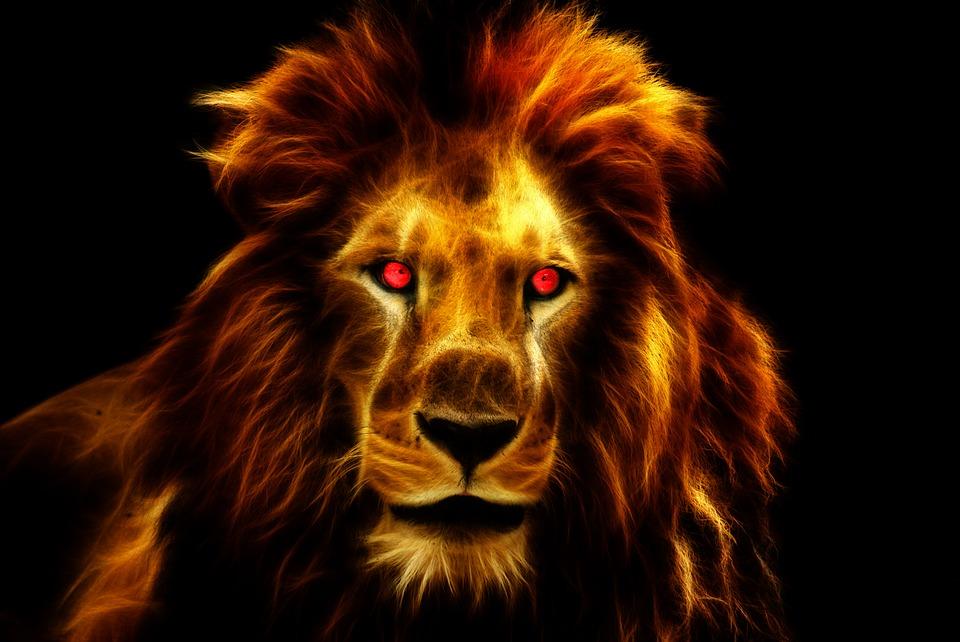 Lion Wallpaper - Lion Wallpaper Hd Black , HD Wallpaper & Backgrounds