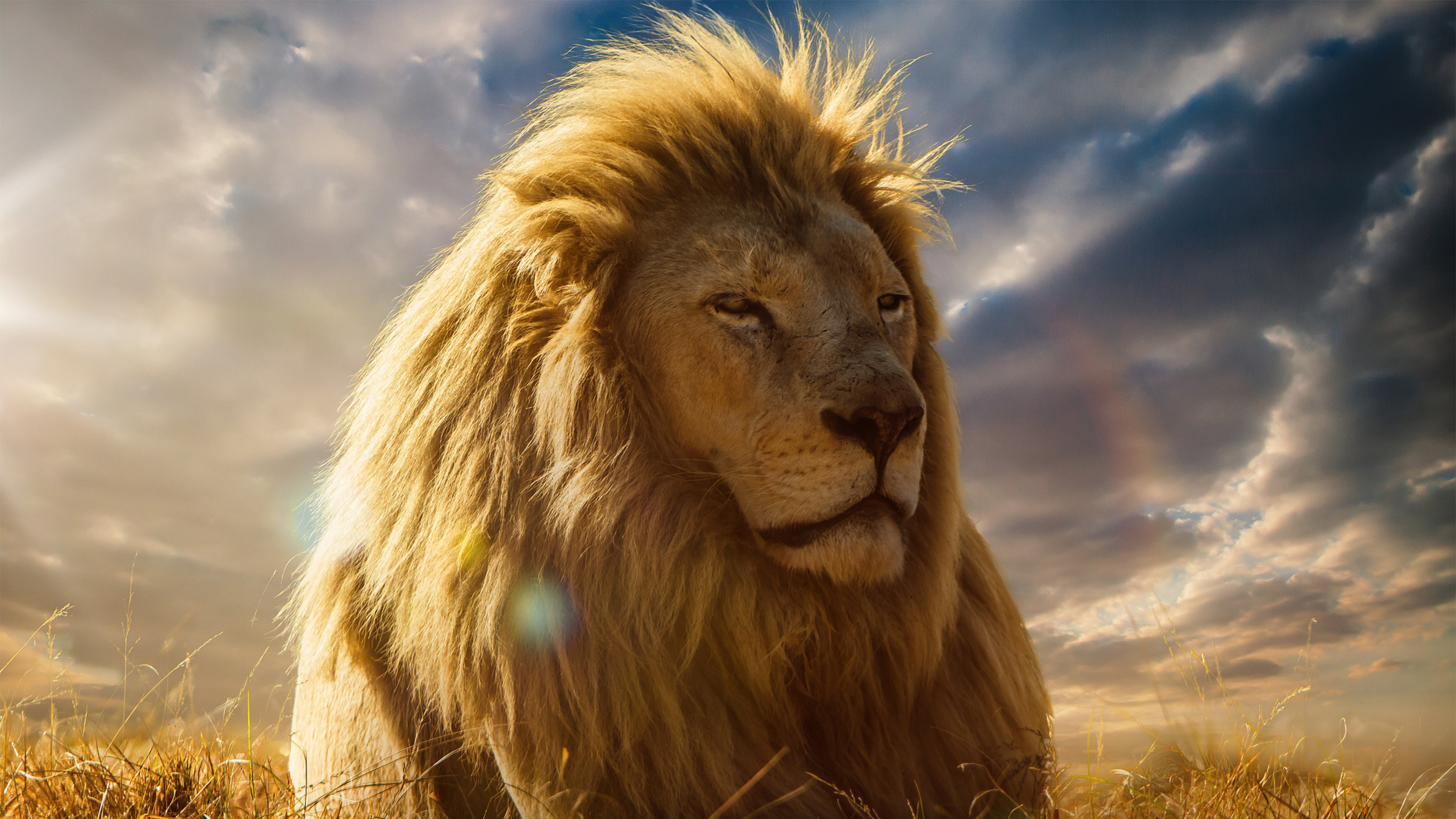 4k Ultra Hd Lion Wallpapers Hd, Desktop Backgrounds , HD Wallpaper & Backgrounds
