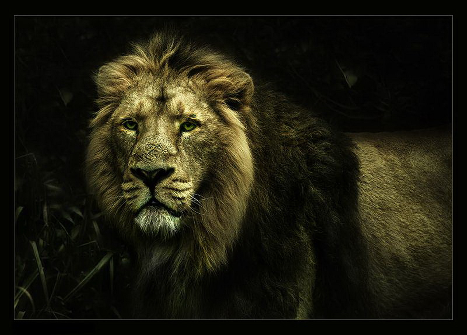 Free Lion Images Wallpaper - Hd Wallpaper Best Lion , HD Wallpaper & Backgrounds