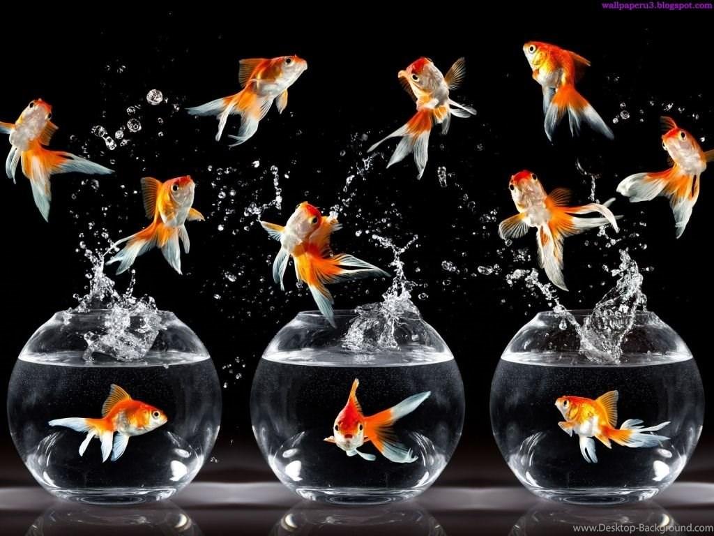 Fullscreen - Hd Wallpaper Beautiful Fish , HD Wallpaper & Backgrounds