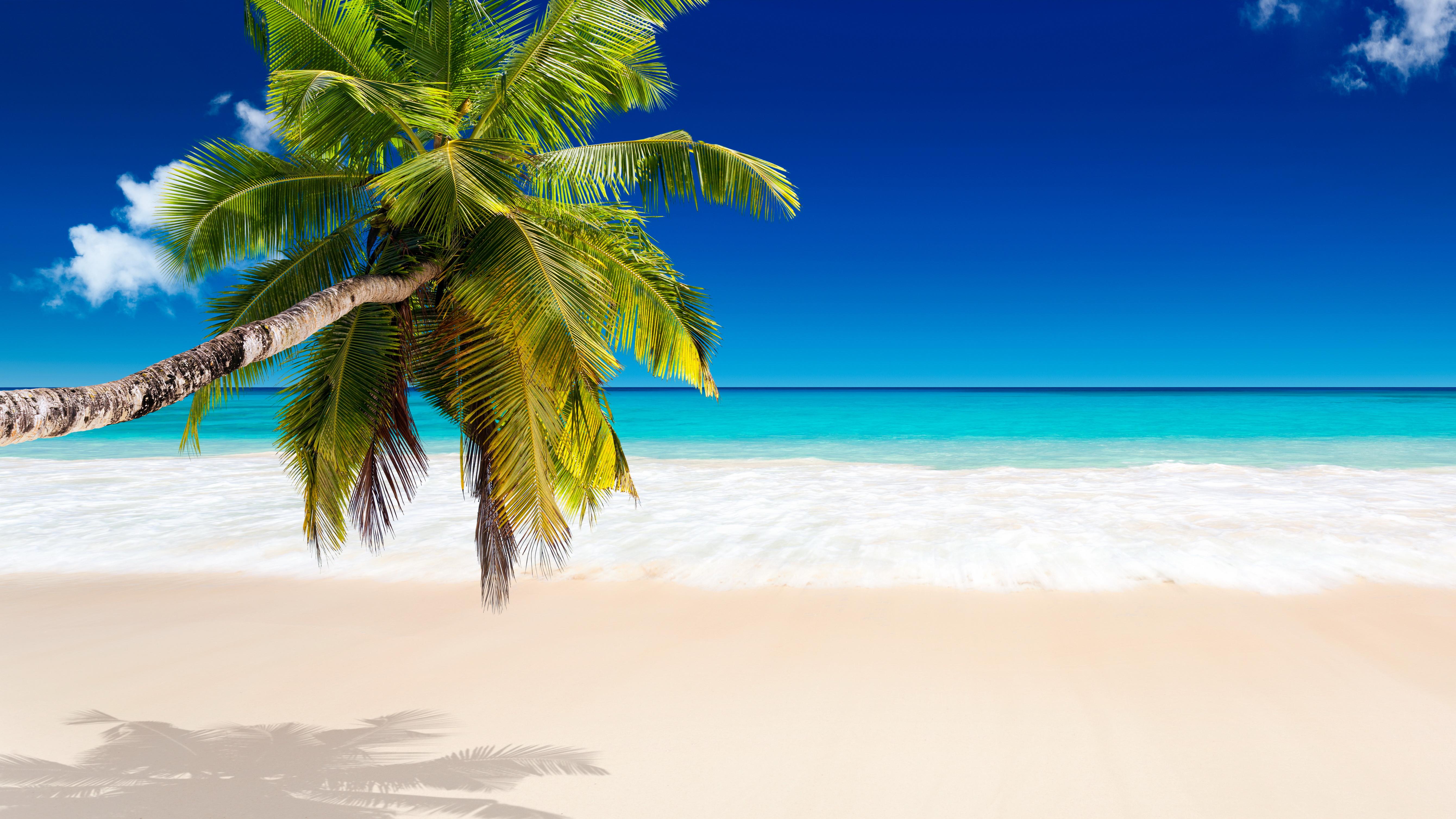 Tropical Beach Wallpaper Tropical Beach Beach Desktop 158923