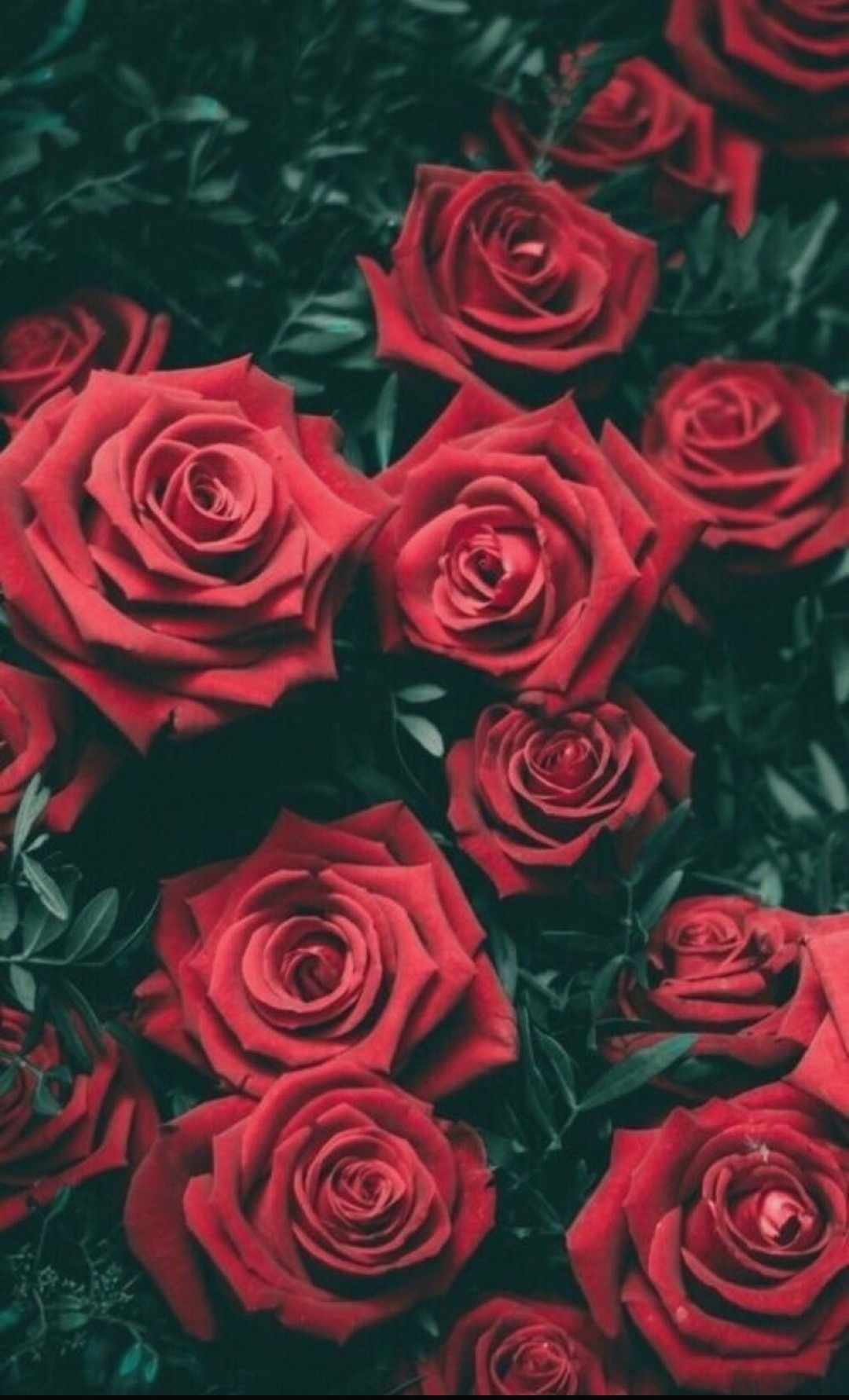 Tumblr Wallpaper Screen Wallpaper Iphone Red Wallpaper Iphone Roses Background 158960 Hd Wallpaper Backgrounds Download