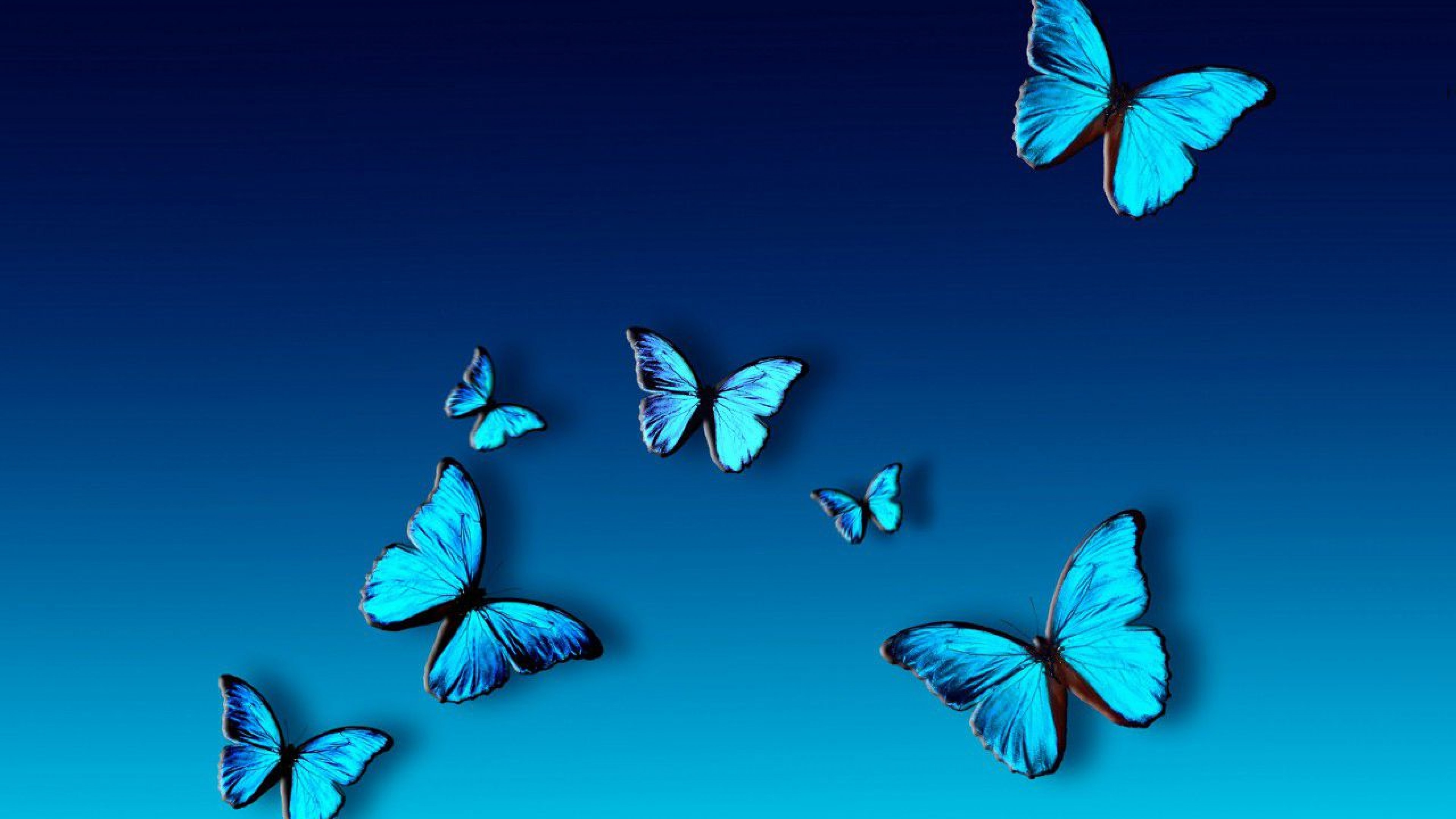 Blue Butterfly Wallpaper - Blue Butterfly Wallpaper Hd , HD Wallpaper & Backgrounds