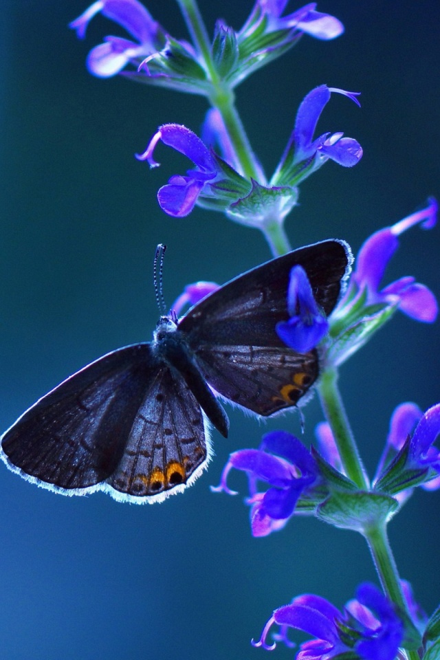 Download Now - Good Morning Beautiful Butterfly , HD Wallpaper & Backgrounds