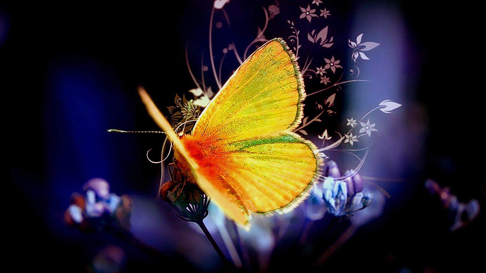 Butterfly Wallpaper - Animated Butterfly Pics With Background , HD Wallpaper & Backgrounds