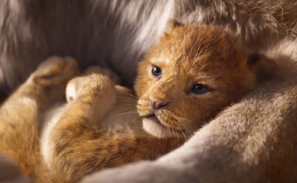 The Lion King 2019 Wallpapers Hd - Lion King 2019 Movie , HD Wallpaper & Backgrounds