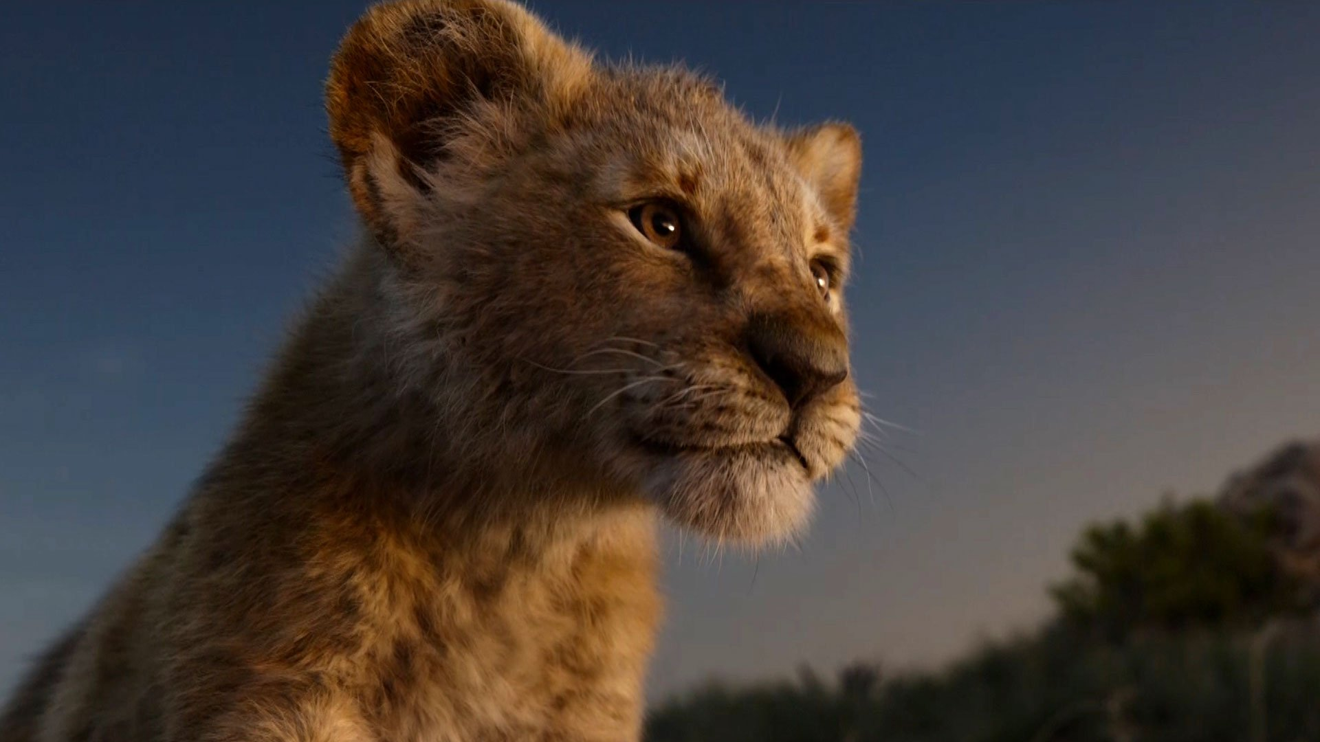 The Lion King - Simba Lion King 2019 , HD Wallpaper & Backgrounds