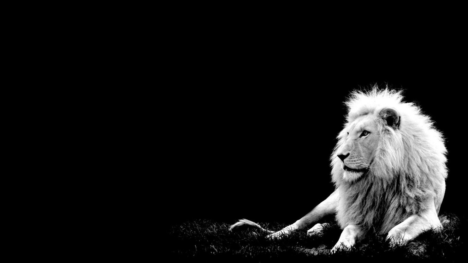 Chronicles Of Narnia Desktop Wallpaper - White Lion With Black Background , HD Wallpaper & Backgrounds