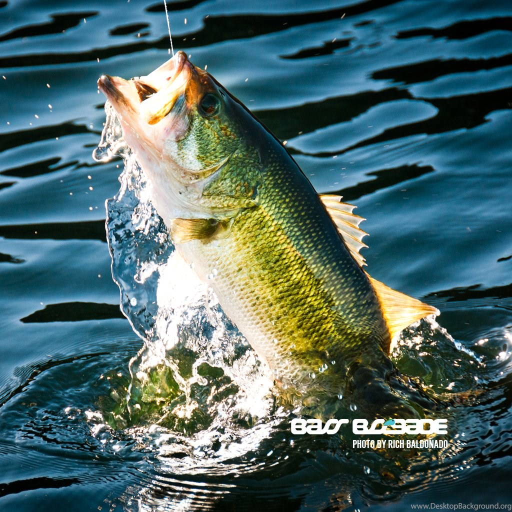 Cool Fishing Wallpapers Cool Pictures Of Bass Fish 1534945 Hd Wallpaper Backgrounds Download