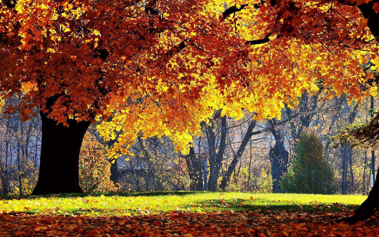 Beautiful Autumn Scenery Wallpapers - Beauty Of Nature In Morning , HD Wallpaper & Backgrounds