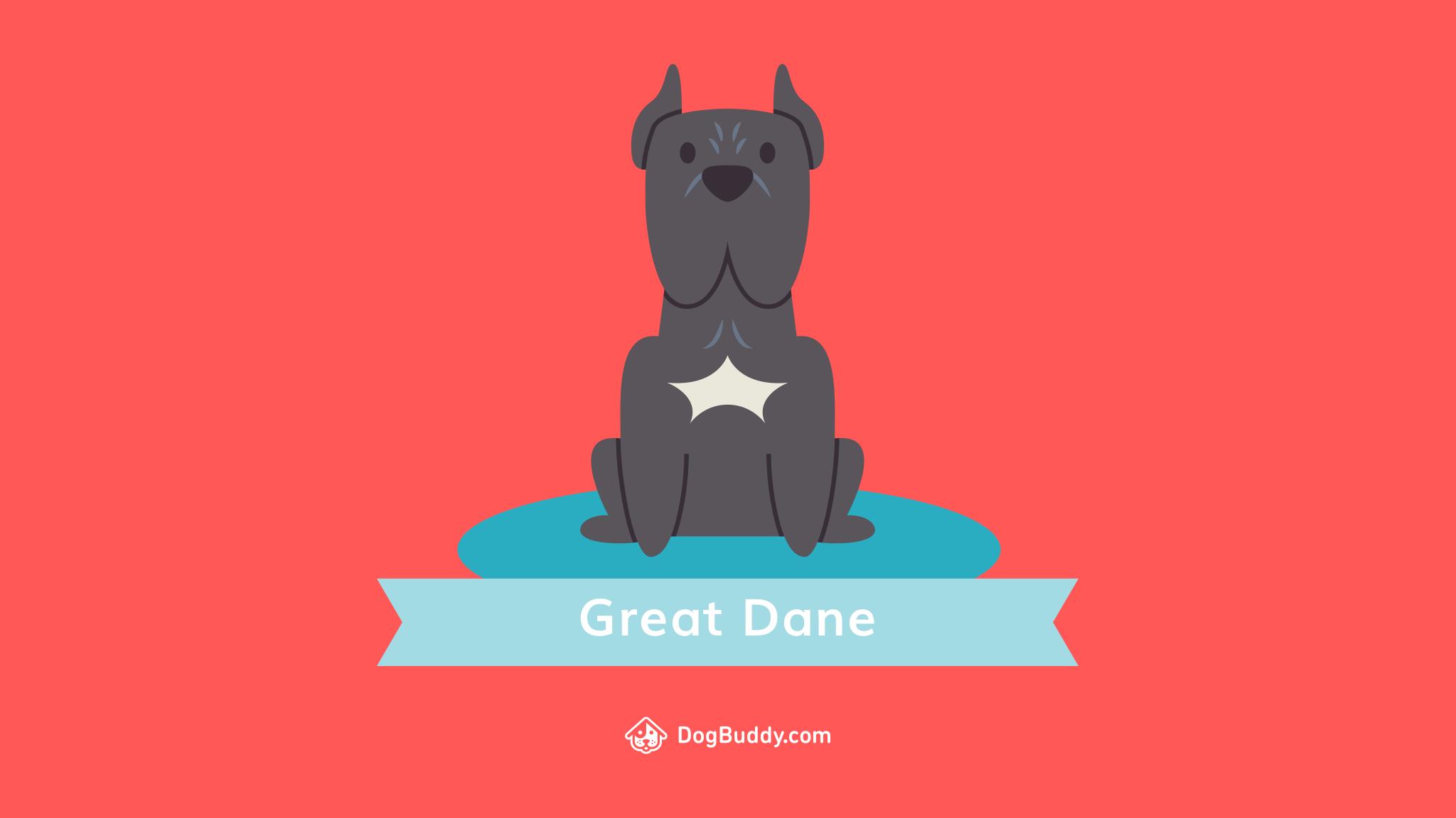 Great Dane Desktop Woofpaper - Standard Schnauzer , HD Wallpaper & Backgrounds