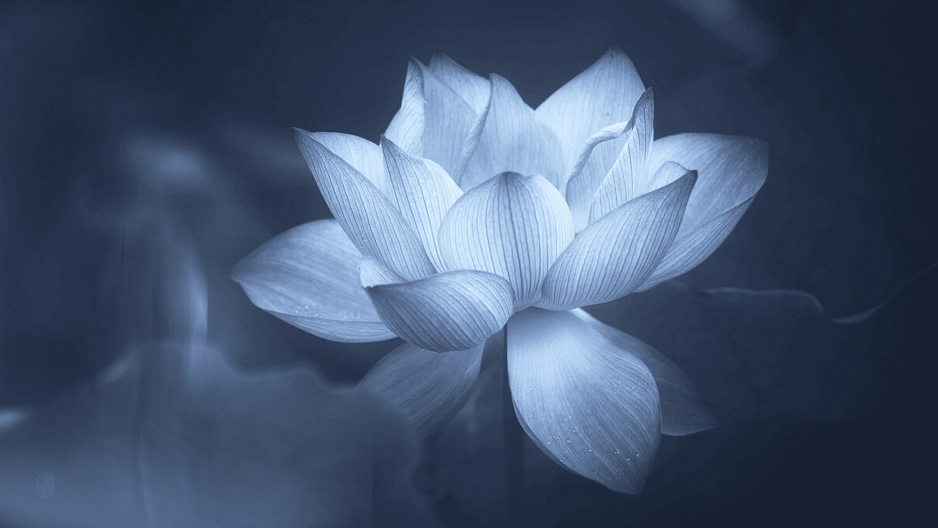Iphone Wallpaper Lotus Flower Water Lotus Flower - Lotus , HD Wallpaper & Backgrounds