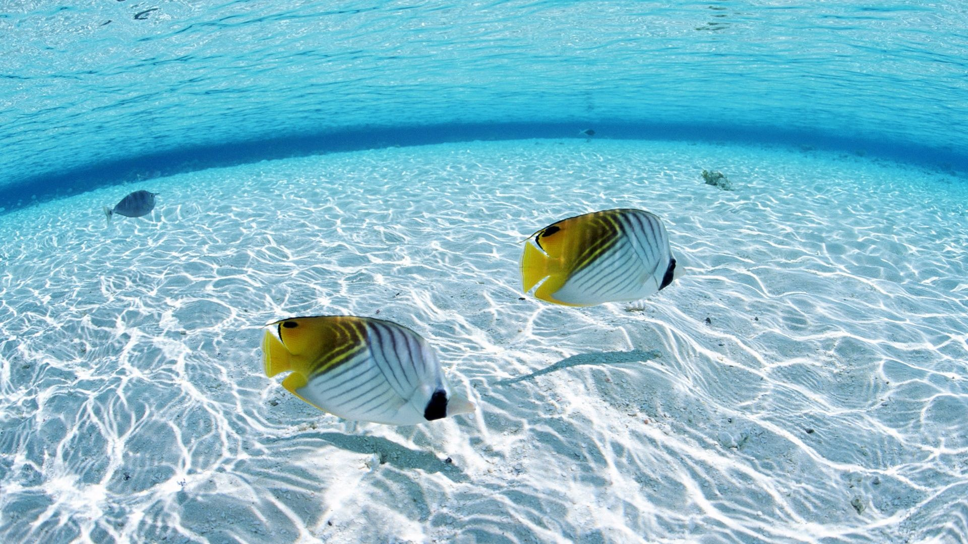 Hd Exotic Wallpapers Under Clear Sea Water 1581909 Hd