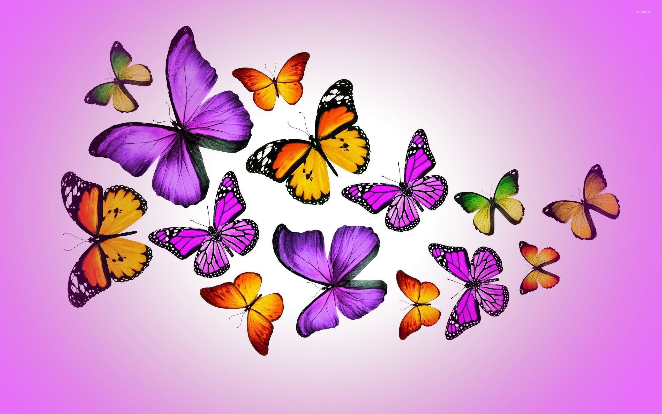 Pink And Purple Butterfly Wallpaper - Monarch Butterfly , HD Wallpaper & Backgrounds