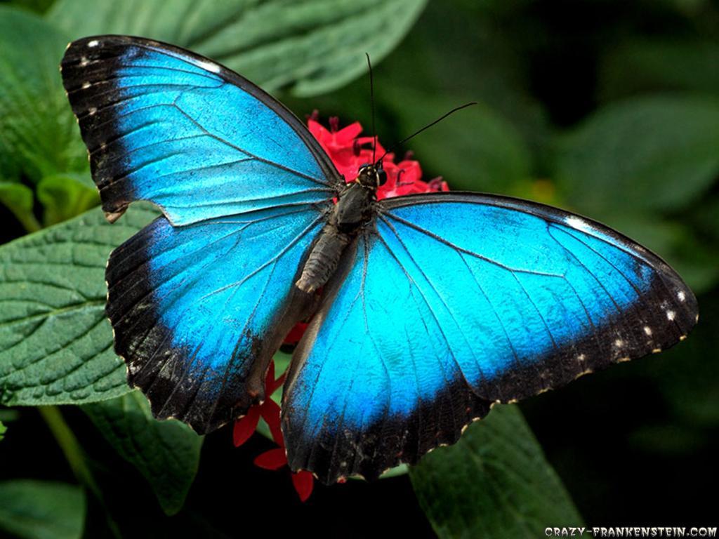 Wallpaper - Beautiful Butterfly Images Hd , HD Wallpaper & Backgrounds