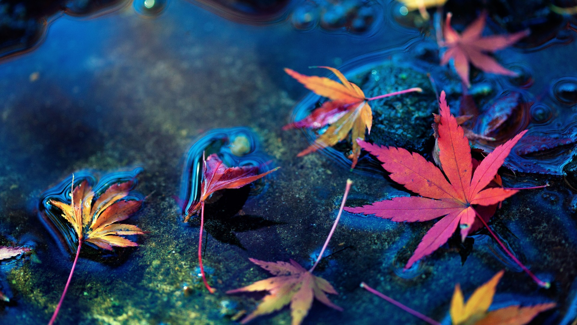 Autumn, Water, Maple Leaves - Beautiful Live Wallpaper Hd , HD Wallpaper & Backgrounds