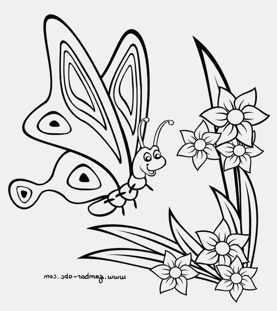 Gambar Kupu Kupu Hitam Putih Keren Taman Kupu Kupu Bunga