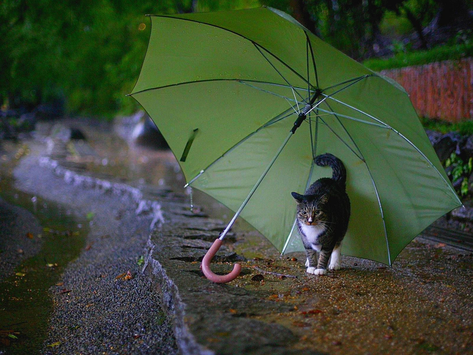 160 1605982 cute rainy weather wallpapers rain good morning images