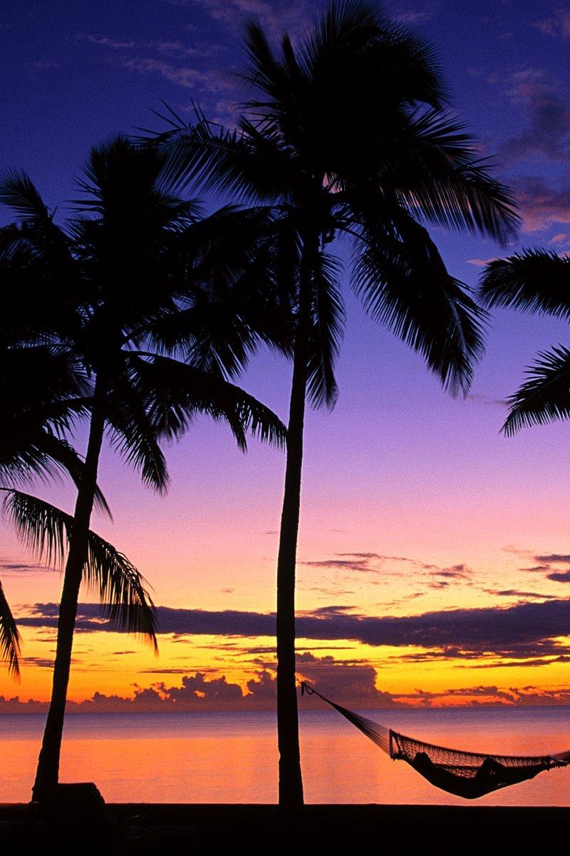 Wallpaper Fiji Palm Trees Hammock Evening Decline