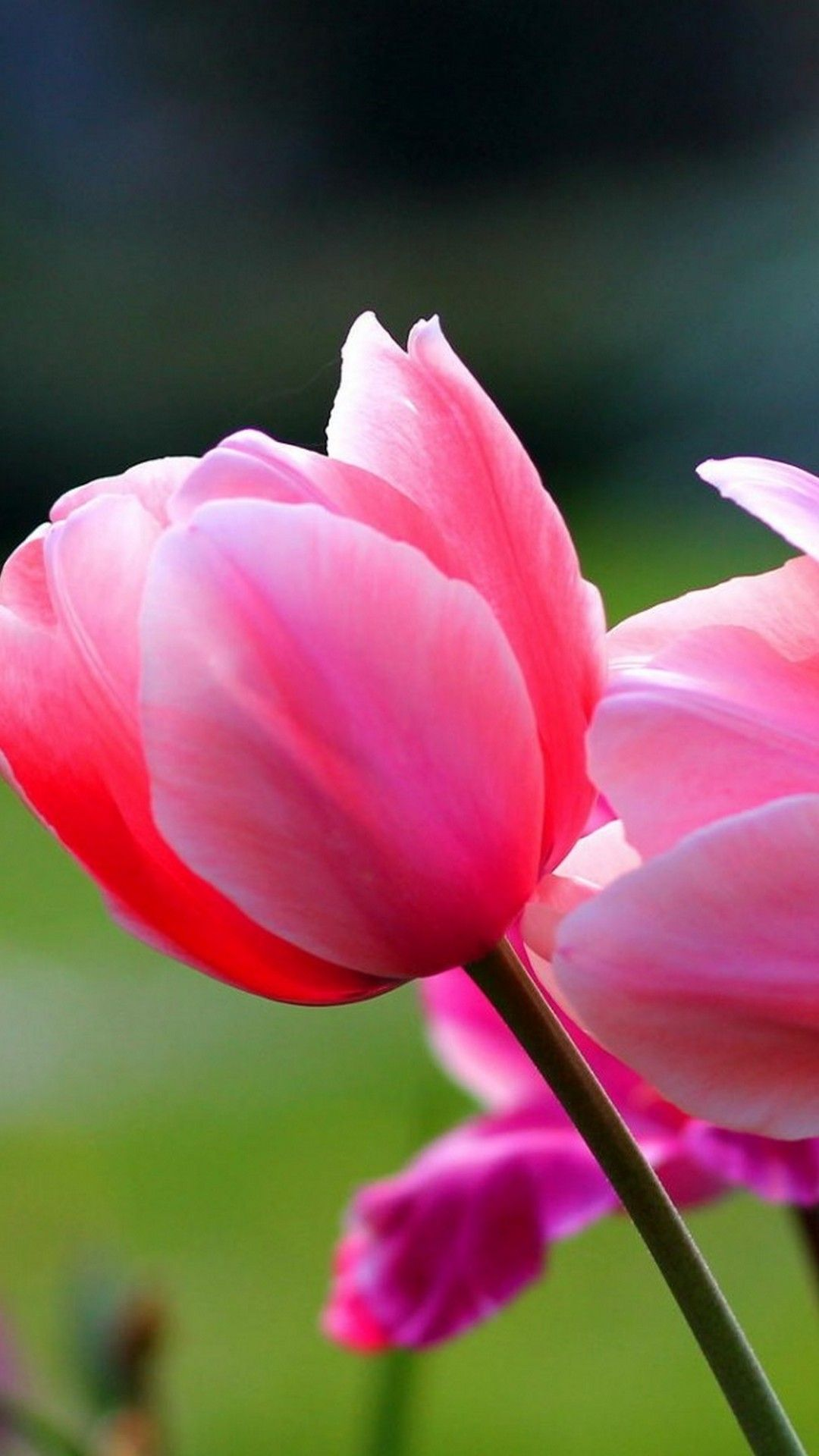 Spring Flowers Wallpapers High Quality Cool Wallpapers