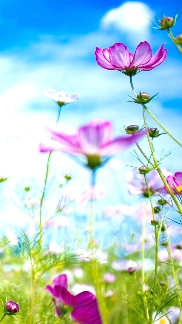 Best Nature Wallpaper For Mobile Free Download Beautiful - Most Beautiful Flowers Wallpapers Desktop , HD Wallpaper & Backgrounds