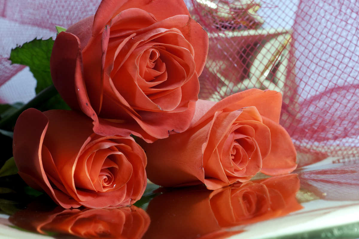 6 Most Beautiful Flowers For Your Girlfriend Scary - Friend Good Morning Images With Roses , HD Wallpaper & Backgrounds