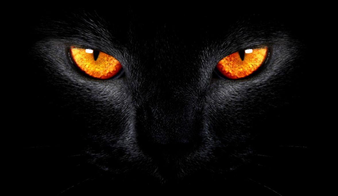 Wallpaper Black Cat Scary Yellow Eyes Dark Background - Black Cat Yellow Eyes , HD Wallpaper & Backgrounds