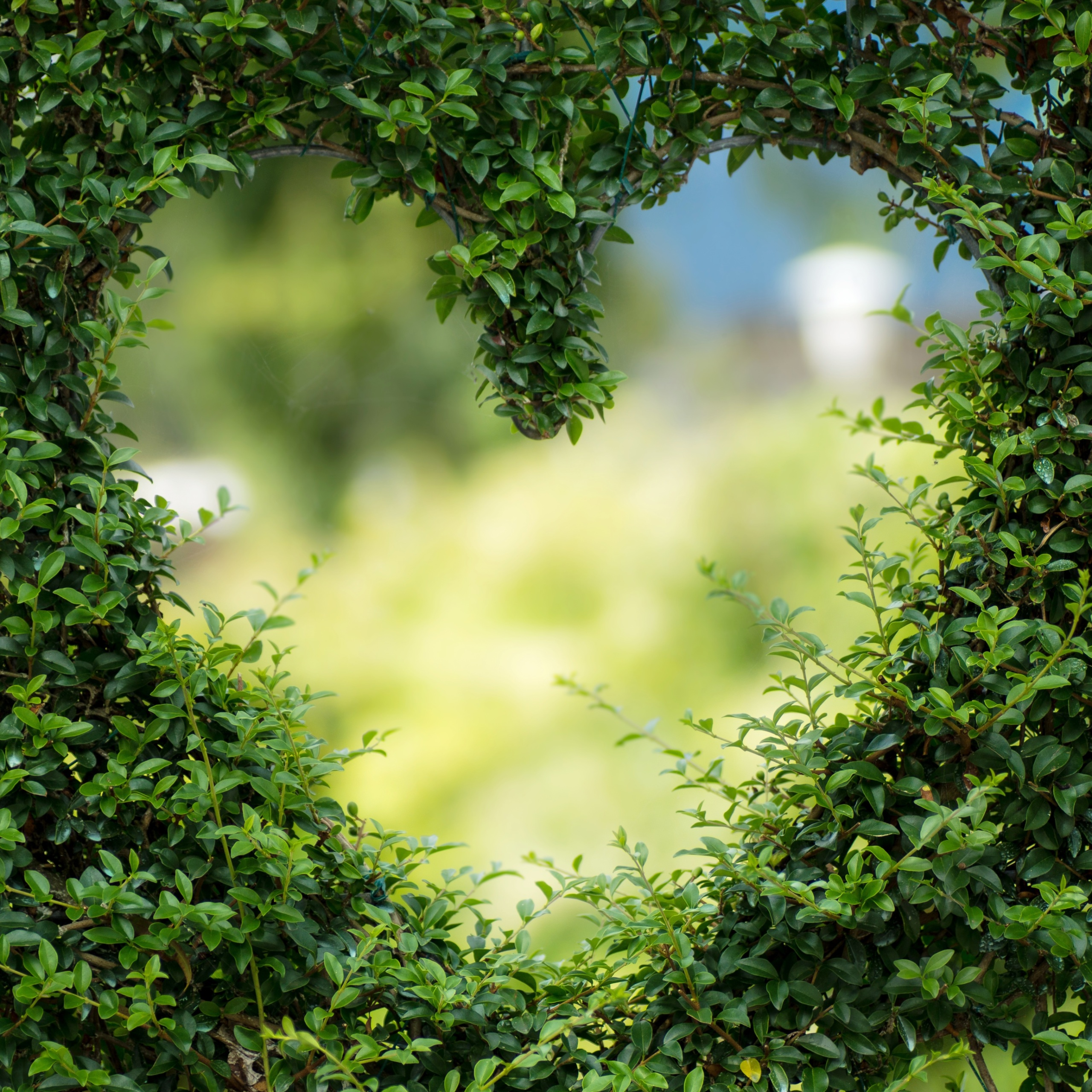 Topiary Hedge Heart Wallpaper 2560×2560 Tablet Android - Love Life Quotes Flowers , HD Wallpaper & Backgrounds