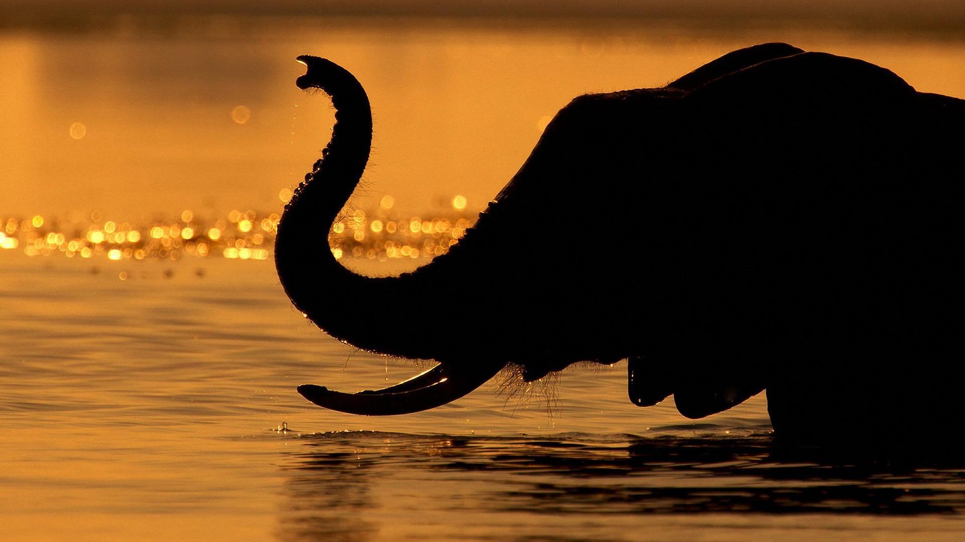 Elephant Siluet Wallpaper Elephant Hd Wallpapers 1080p