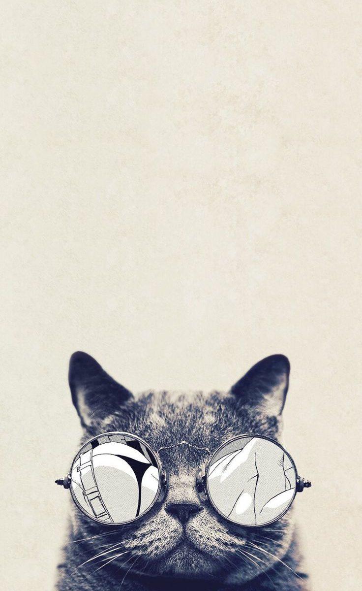Hipster Wallpaper Iphone 6 - Desktop Cat Wallpaper Hd , HD Wallpaper & Backgrounds