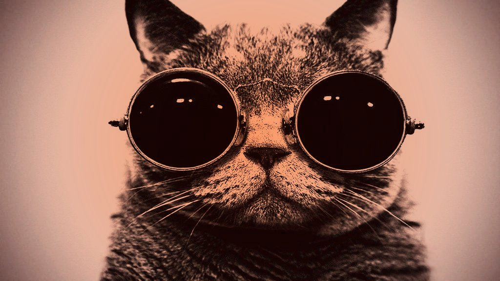 Bamf Cat With Sunglasses Toaster Hd Wallpaper - Trap Music Mix 💣 2017 Bass Boosted 💣 Best Trap Hits , HD Wallpaper & Backgrounds