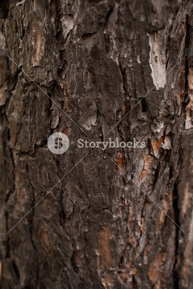 Wood Texture Material Wallpaper Concept Red Pine 1697374