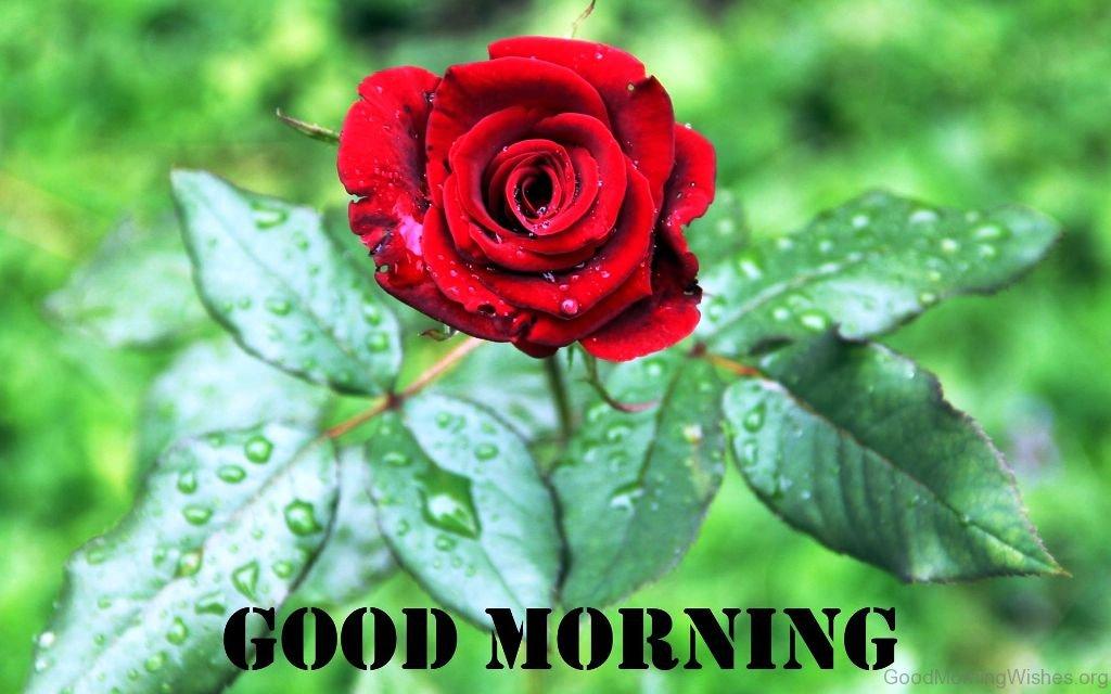 Good Morning Beautiful Pic - Beautiful Flower Good Morning , HD Wallpaper & Backgrounds