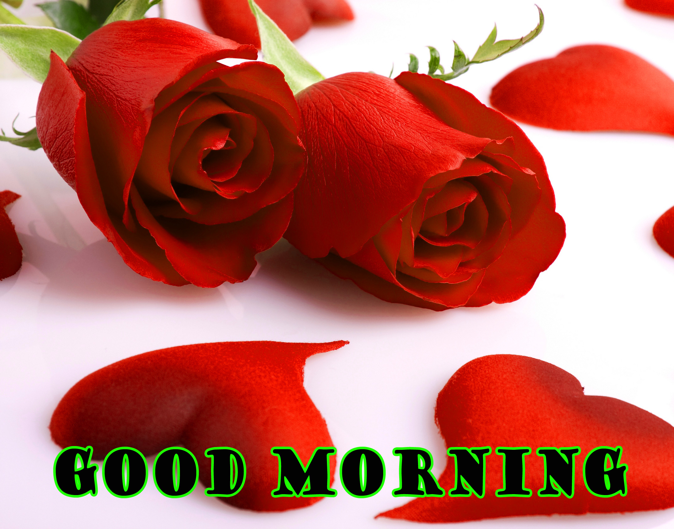 Good Morning Red Rose Pictures Images Photo Free Hd - Red Rose Good Morning , HD Wallpaper & Backgrounds