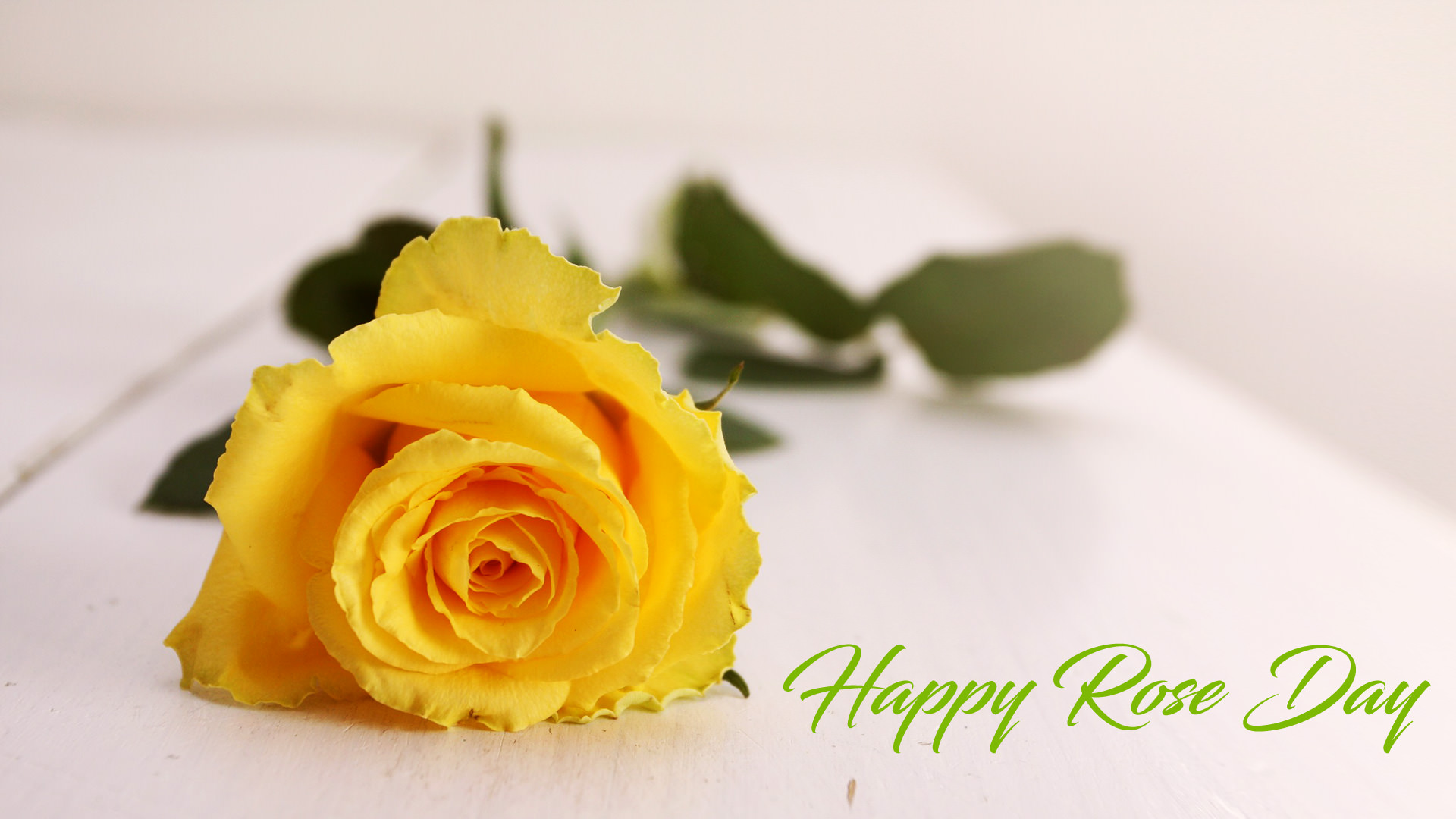 Yellow Rose Day Images For Friendship - Yellow Rose Love Quotes , HD Wallpaper & Backgrounds