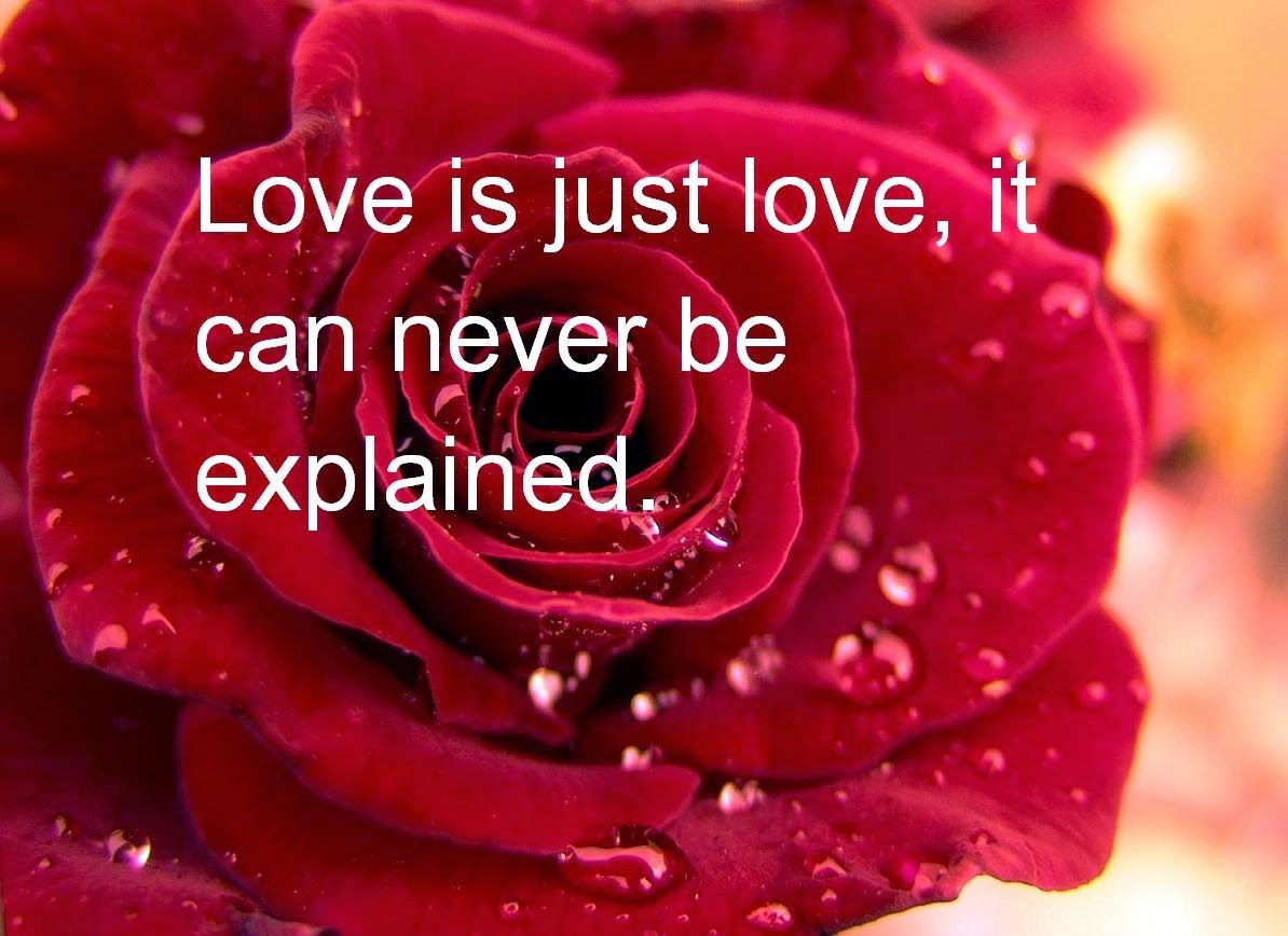 Red Rose Wallpaper With Love Quotes - Beautiful Red Roses With Love Quotes , HD Wallpaper & Backgrounds