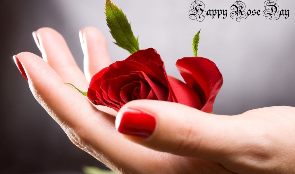 Happy Rose Day Hd Images - Happy Rose Day Hd , HD Wallpaper & Backgrounds