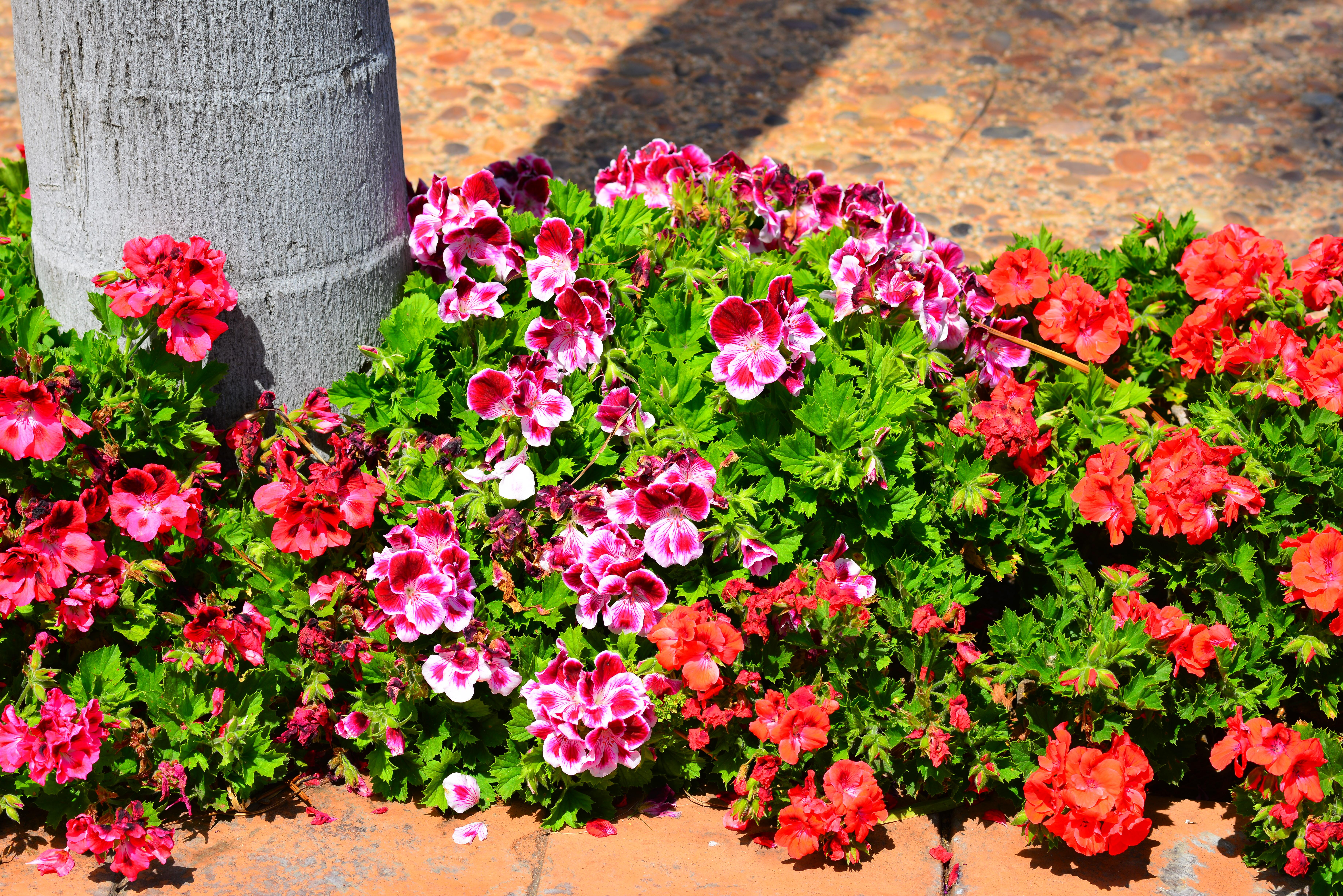 400 Pixels Wide And 150 Tall Clipart For Facebook Cover - Petunia , HD Wallpaper & Backgrounds