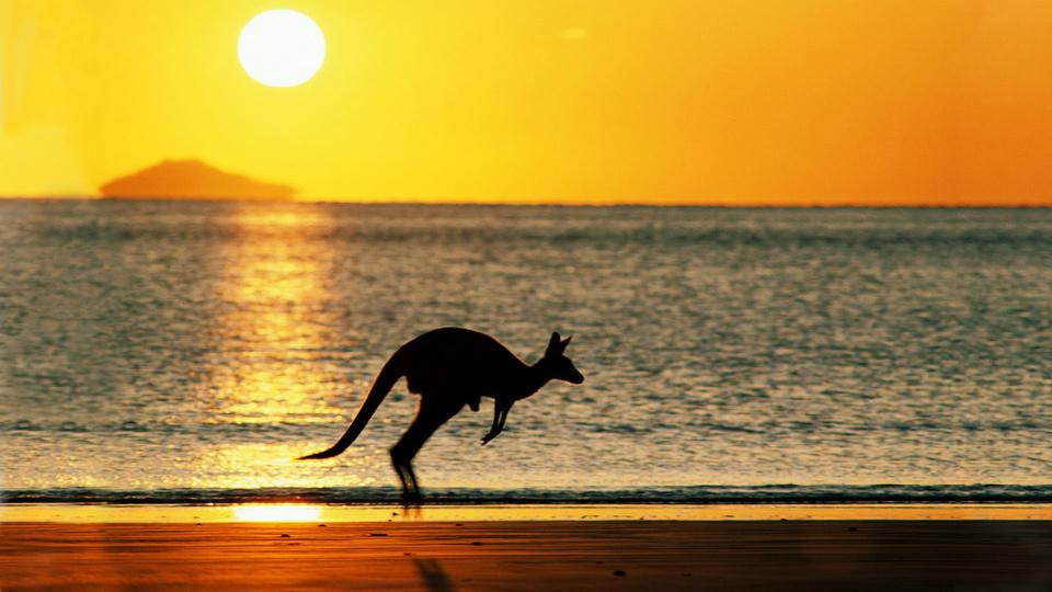 Download Australia Nature Kangaroo 1742893 Hd