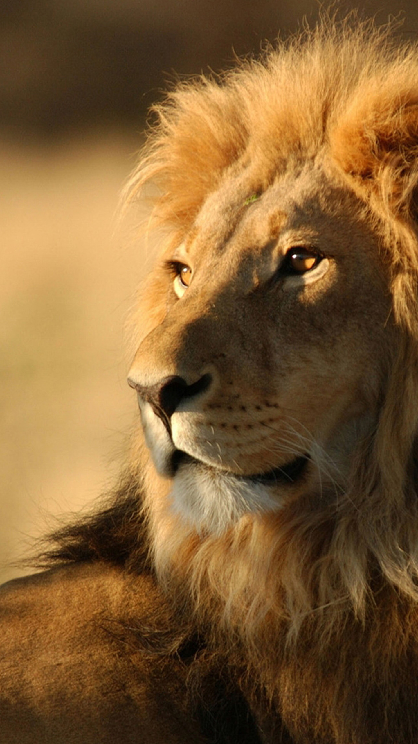 Lion Animal Wallpapers - Iphone Lion Wallpaper Hd , HD Wallpaper & Backgrounds