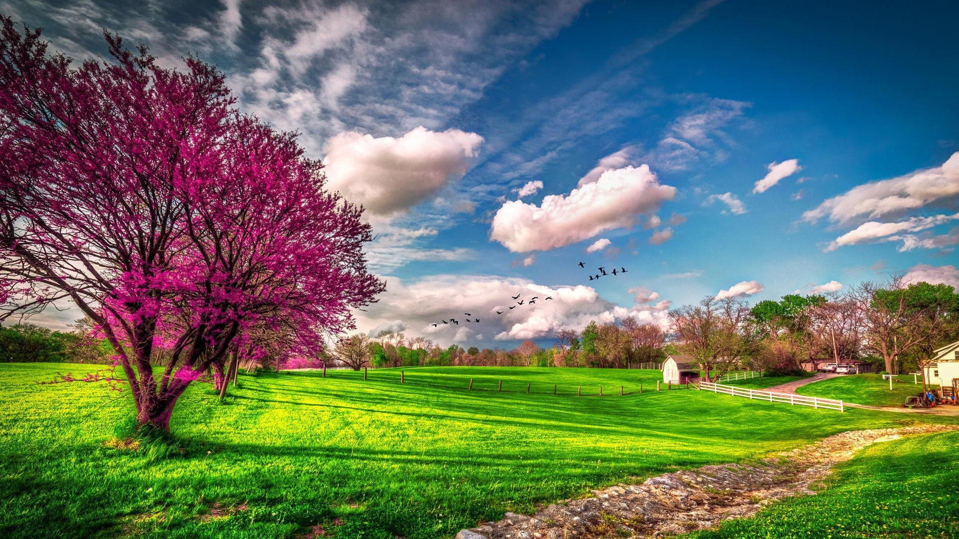 Arbol Naturaleza Paisajes Prado Primavera Windows 10
