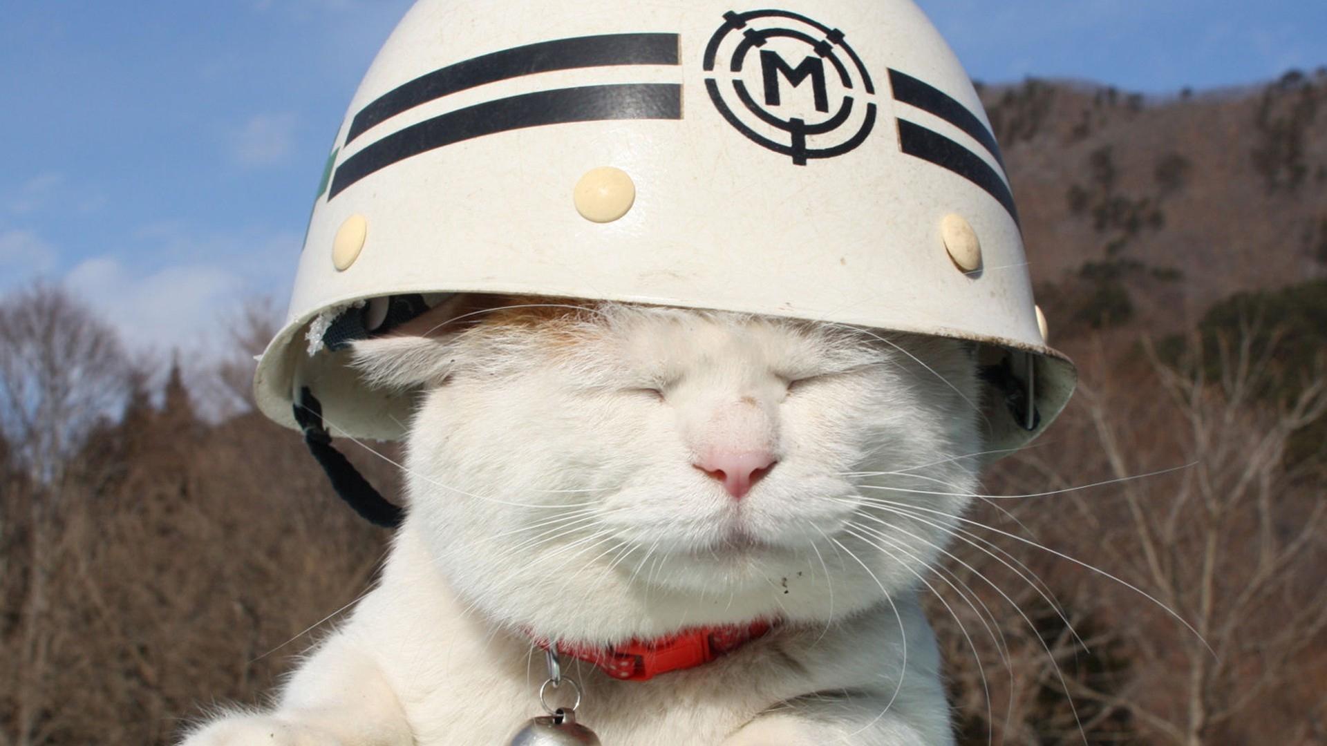 Wallpaper Cat Hat Sun Squinting Cat Hard Hat Meme 1792448