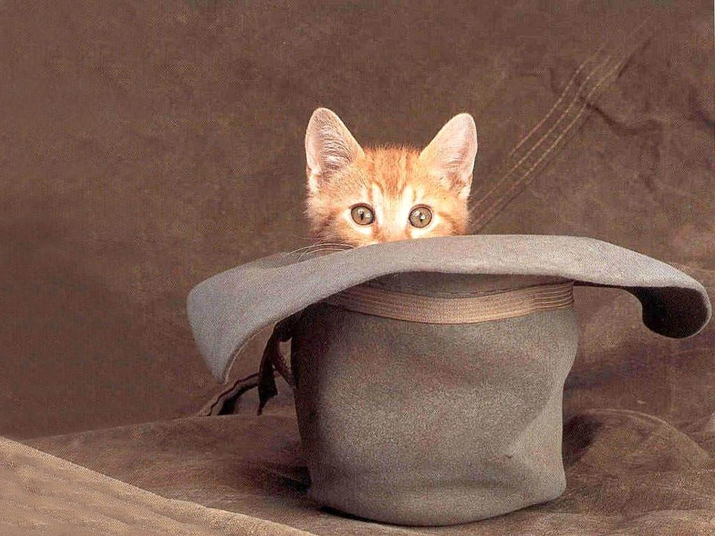 Cute Kittens With Hats , Cats Sitting In Hats (1792510