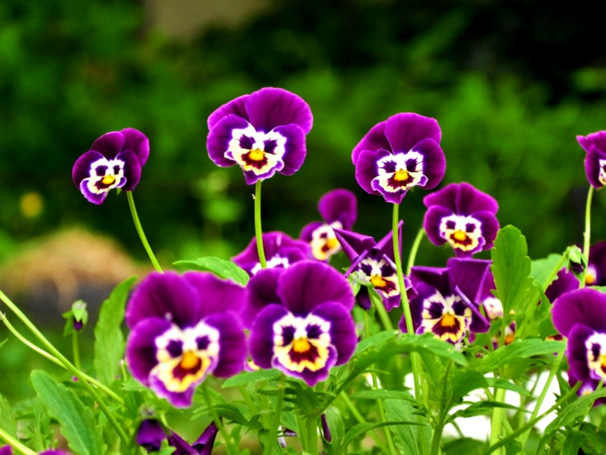 Nature Flower Hd Nababan Wallpapers - Hd Image Of Nature With Flower , HD Wallpaper & Backgrounds